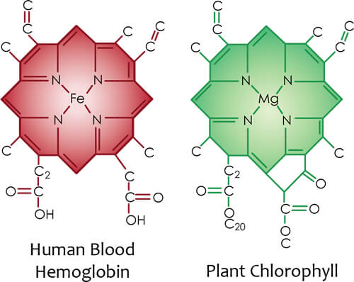 chlorophyll haemoglobin spirulina